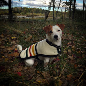 Filbert Fashions Handcrafted Goods Made Of Pendleton Wool Dog